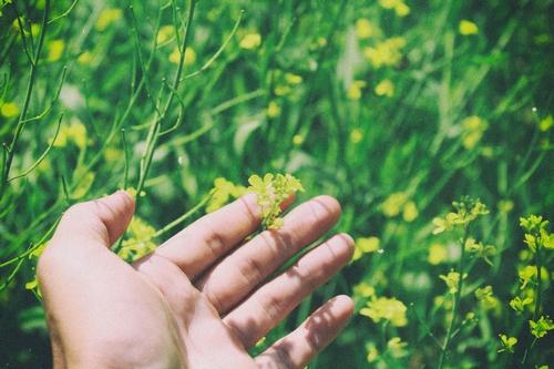 Nature hand